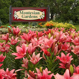 Montesian Gardens